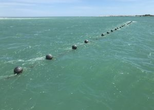 Line of Pearl Oysters near Broome
